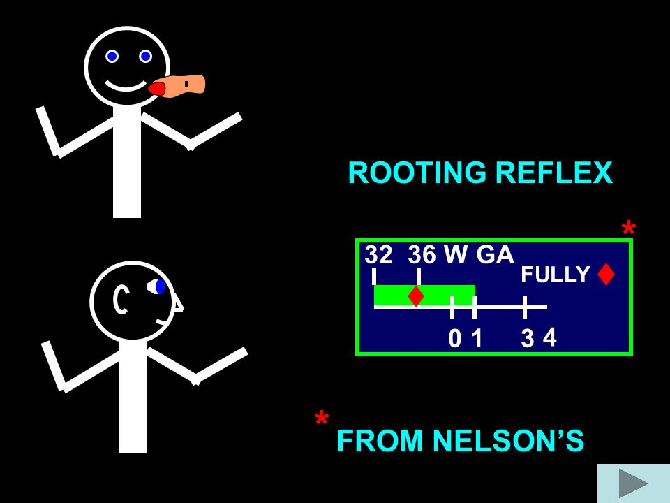 ROOTING REFLEX * 3 4 32 36 W GA FULLY 1 * FROM NELSON'S