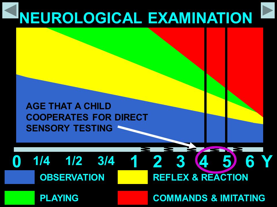 1 2 3 4 5 6 Y NEUROLOGICAL EXAMINATION 1/4 1/2 3/4