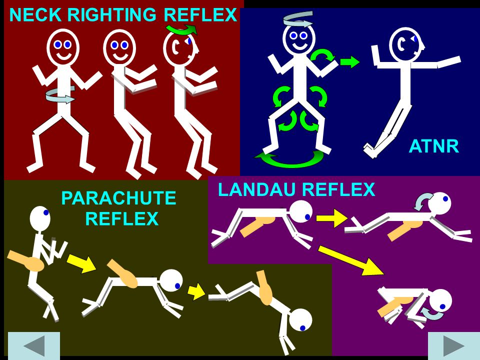 NECK RIGHTING REFLEX ATNR LANDAU REFLEX PARACHUTE REFLEX