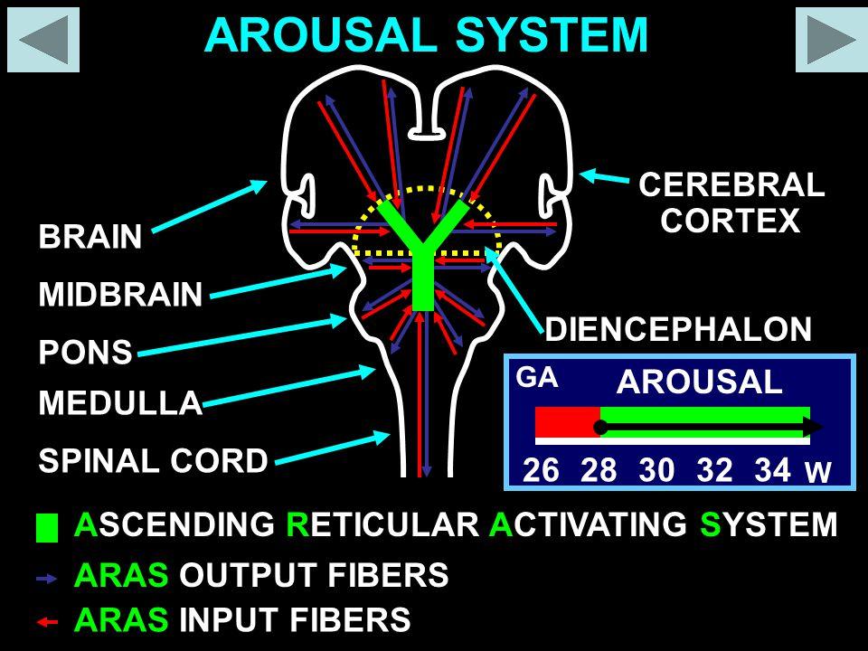 AROUSAL SYSTEM CEREBRAL CORTEX BRAIN MIDBRAIN DIENCEPHALON PONS 26 28