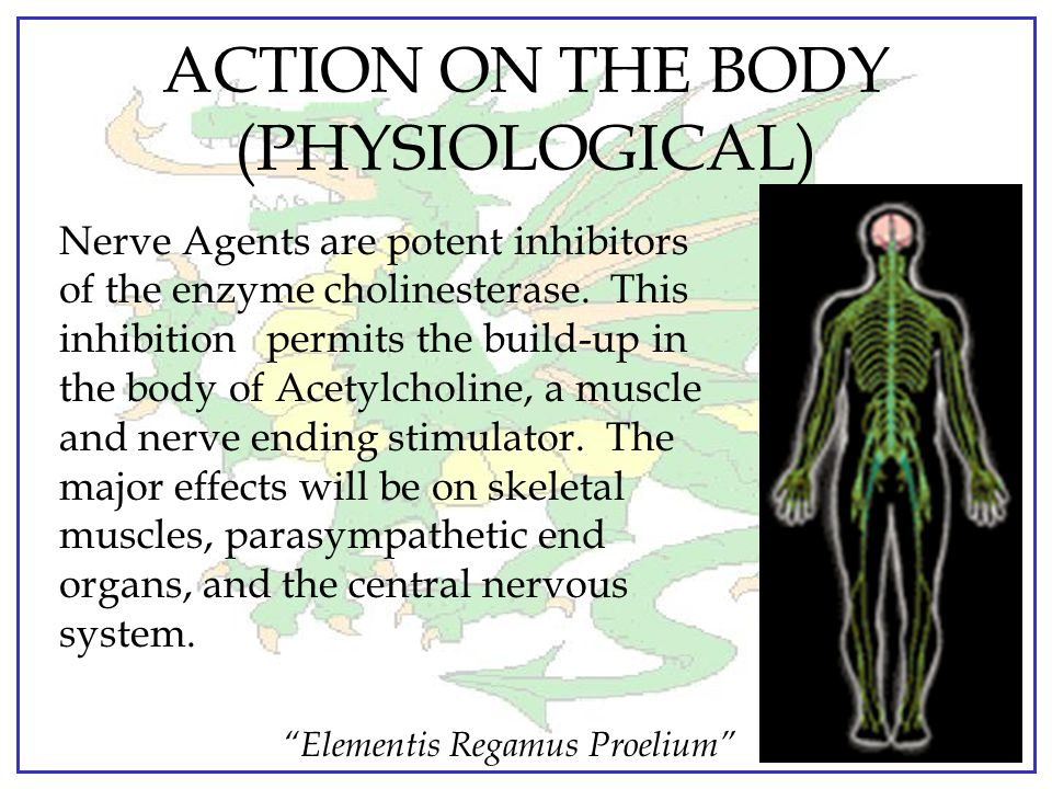 ACTION ON THE BODY (PHYSIOLOGICAL)