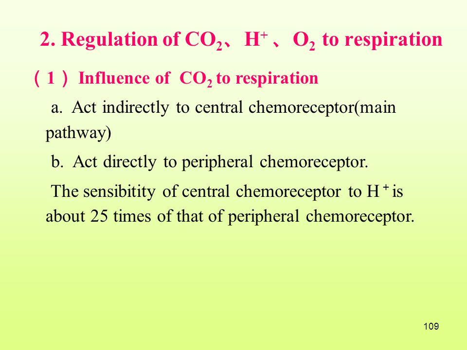 2. Regulation of CO2、H+ 、O2 to respiration