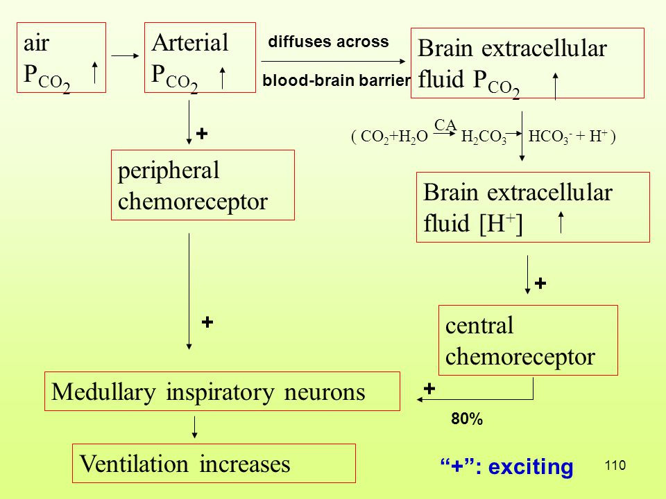 Brain extracellular fluid PCO2