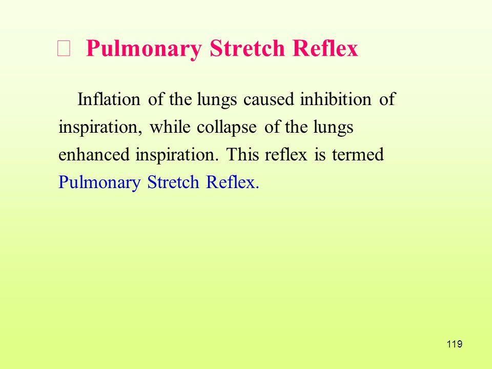 Ⅳ Pulmonary Stretch Reflex