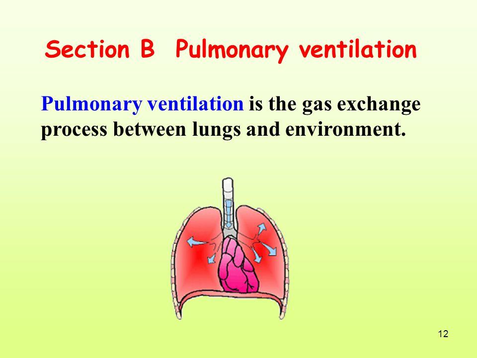 Section B Pulmonary ventilation