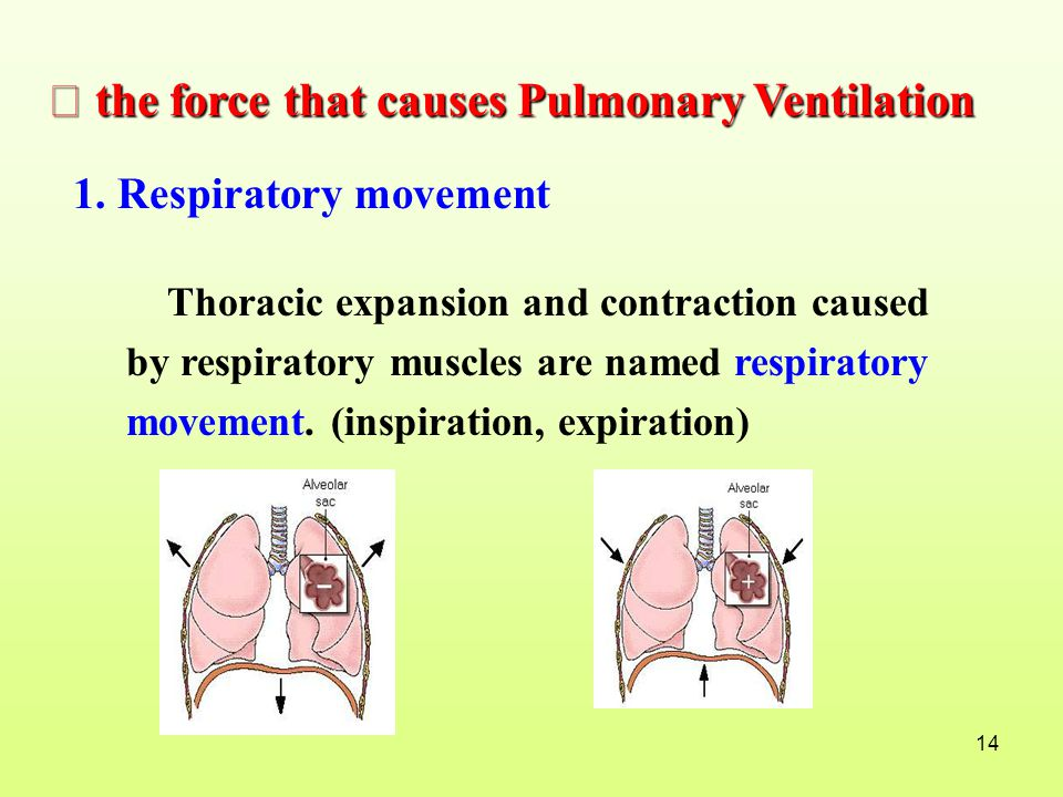 Ⅰ the force that causes Pulmonary Ventilation