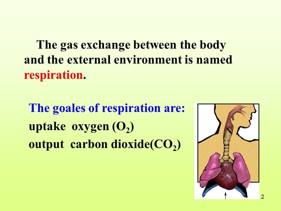 The gas exchange between the body and the external environment is named respiration.