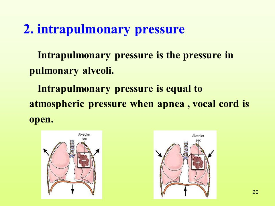 2. intrapulmonary pressure