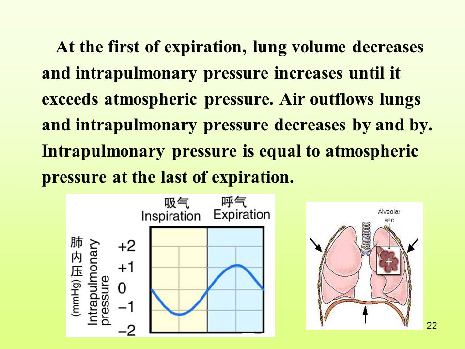 At the first of expiration, lung volume decreases and intrapulmonary pressure increases until it exceeds atmospheric pressure.