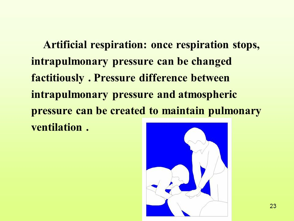 Artificial respiration: once respiration stops, intrapulmonary pressure can be changed factitiously .