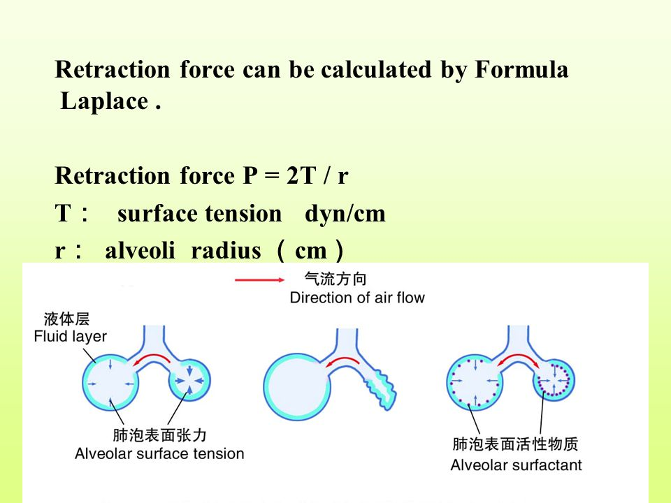 Retraction force can be calculated by Formula Laplace .
