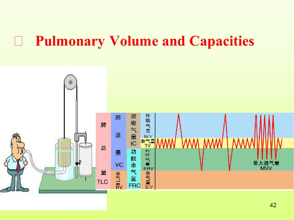 Ⅲ Pulmonary Volume and Capacities