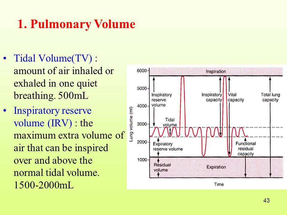 1. Pulmonary Volume Tidal Volume(TV) : amount of air inhaled or exhaled in one quiet breathing. 500mL.