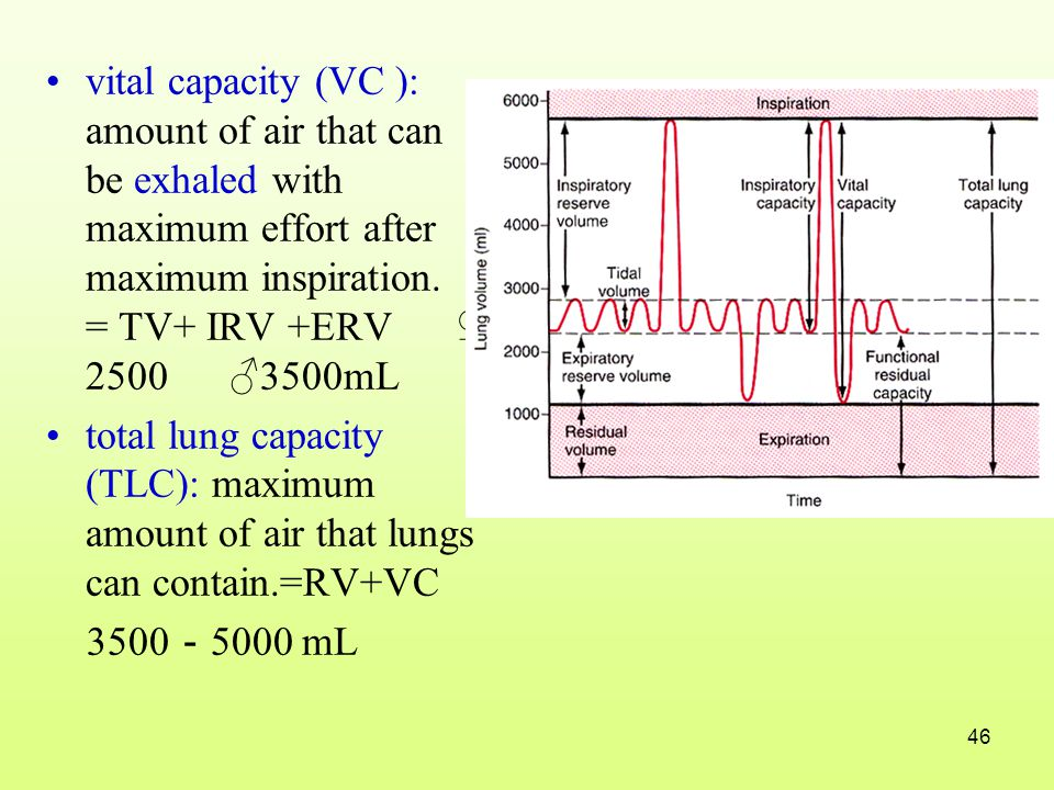 vital capacity (VC ): amount of air that can be exhaled with maximum effort after maximum inspiration. = TV+ IRV +ERV ♀ 2500 ♂3500mL