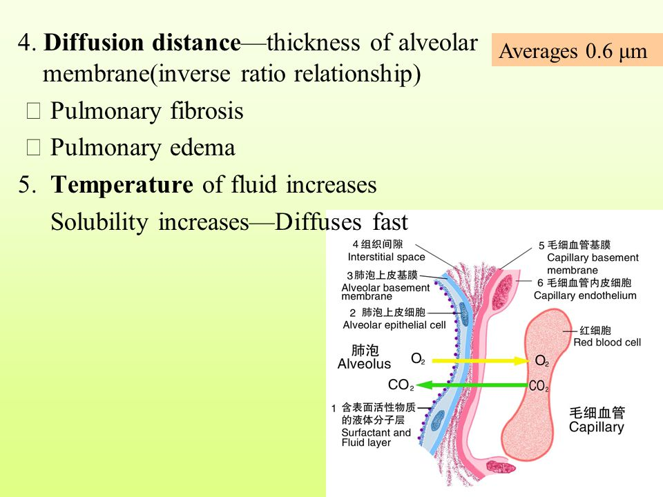 5. Temperature of fluid increases Solubility increases—Diffuses fast