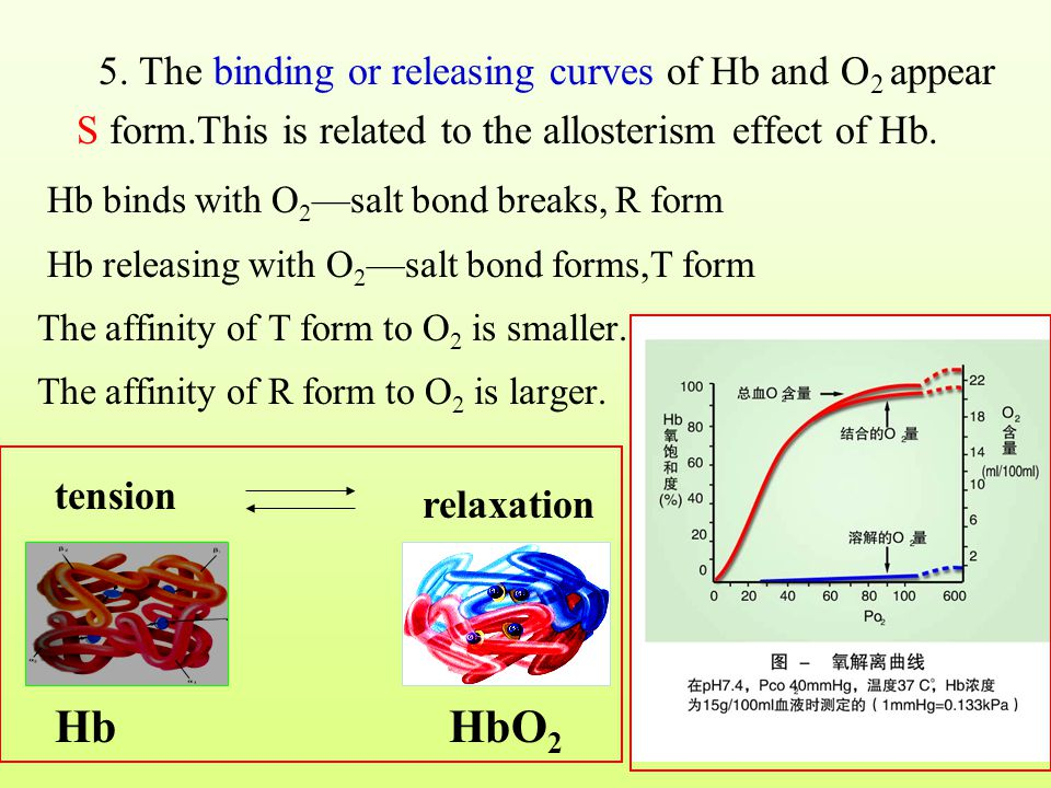5. The binding or releasing curves of Hb and O2 appear S form