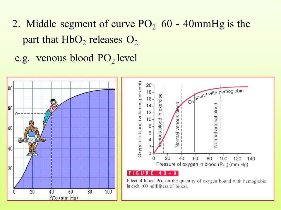 2. Middle segment of curve PO2 60-40mmHg is the part that HbO2 releases O2.