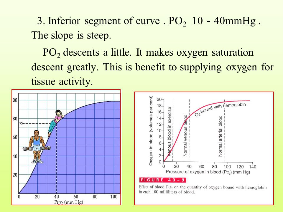 3. Inferior segment of curve . PO2 10-40mmHg . The slope is steep.