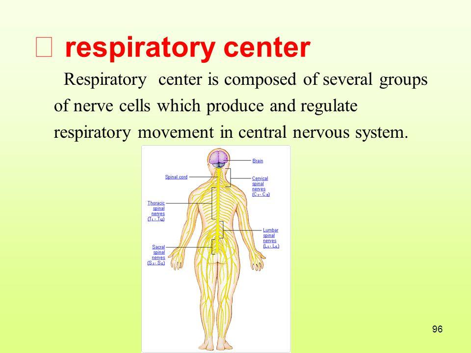 Ⅰ respiratory center