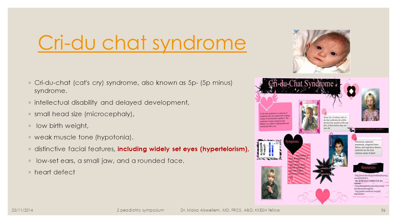 cri du chat syndrome description essay Each year in the united states, about 50 to 60 children, both male and female, are born with cri du chat syndrome cri du chat is also known as cry of the cat, cat cry syndrome, or 5p minus syndrome cri du chat is recognized at birth by a high pitched cry, low birth weight, a small head, webbing of fingers and toes, small jaw, poor.