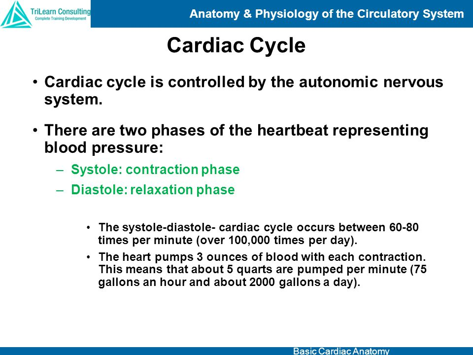 Cardiac Cycle Cardiac cycle is controlled by the autonomic nervous system. There are two phases of the heartbeat representing blood pressure: