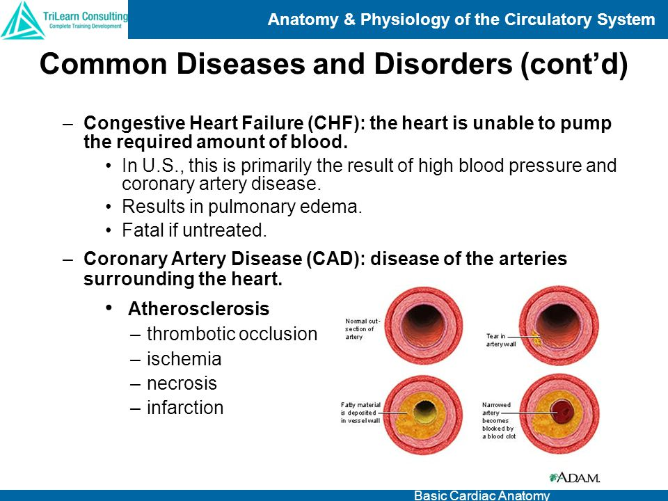Common Diseases and Disorders (cont'd)