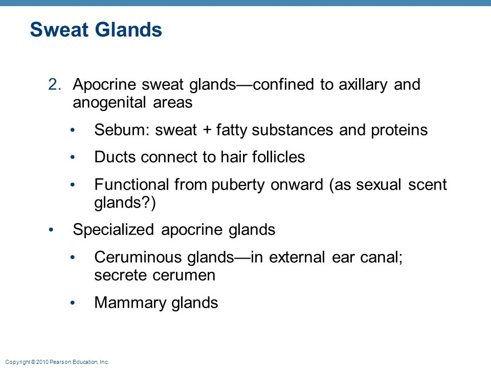 Sweat Glands Apocrine sweat glands—confined to axillary and anogenital areas. Sebum: sweat + fatty substances and proteins.