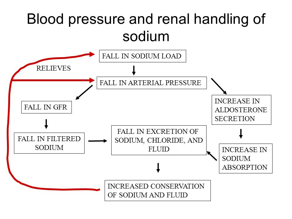 Blood pressure and renal handling of sodium