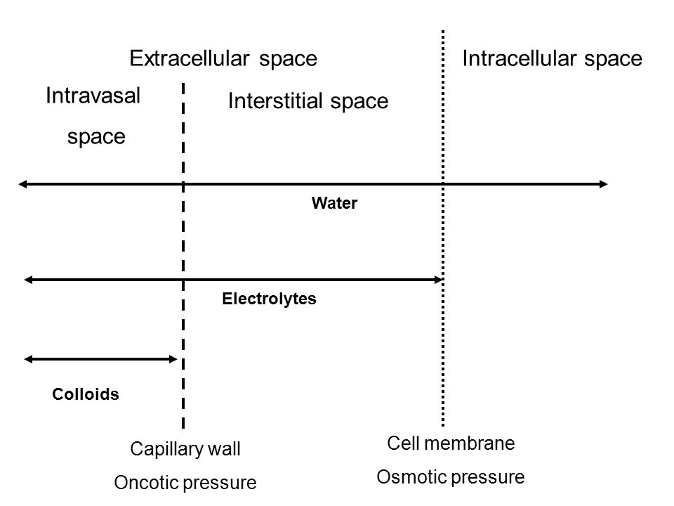 Extracellular space Intracellular space Intravasal space