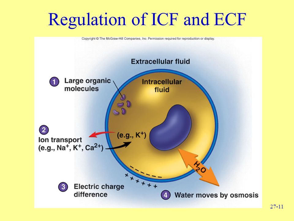 Regulation of ICF and ECF