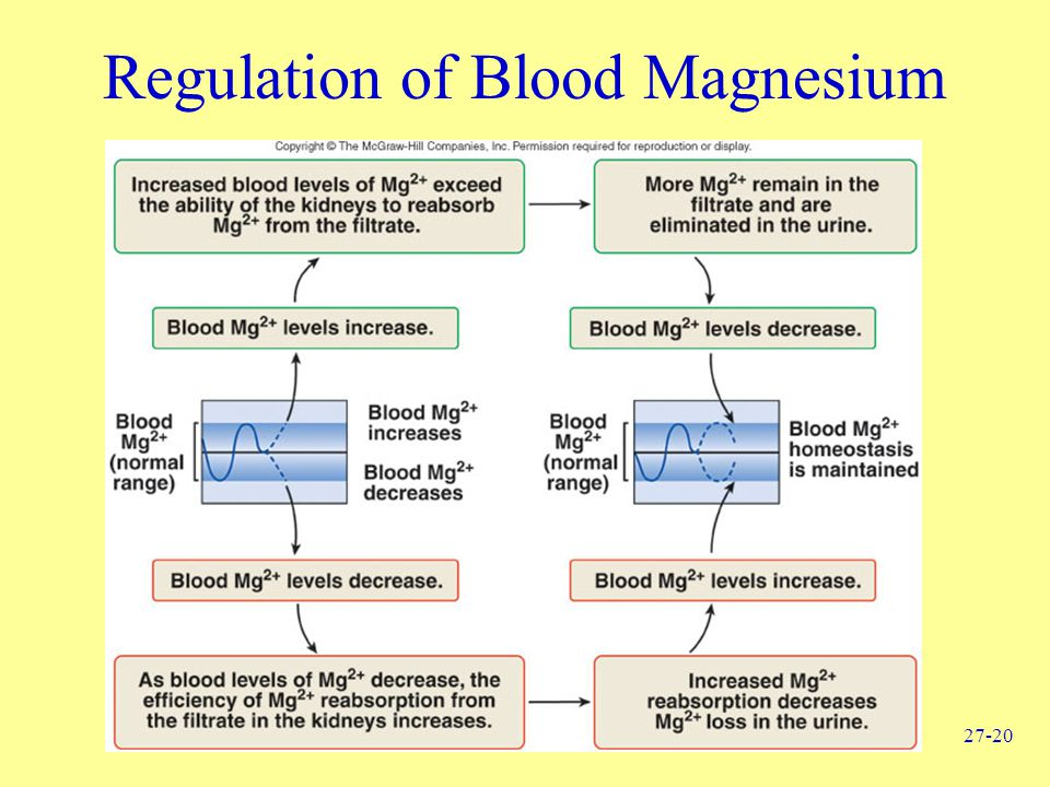 Regulation of Blood Magnesium