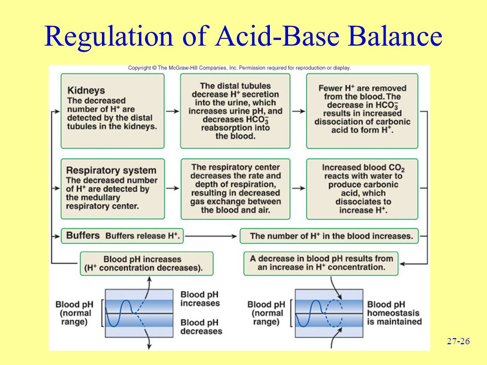 Regulation of Acid-Base Balance