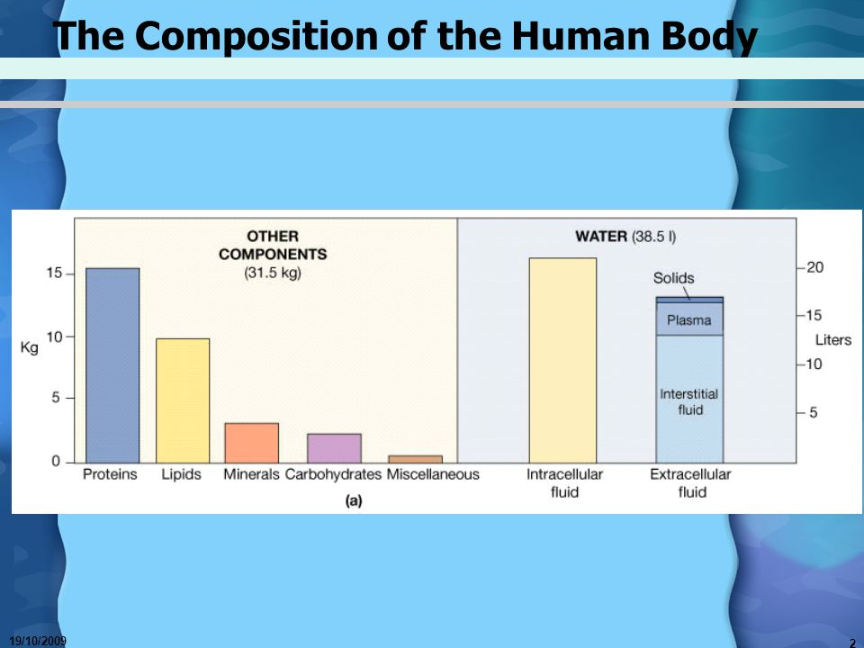 The Composition of the Human Body