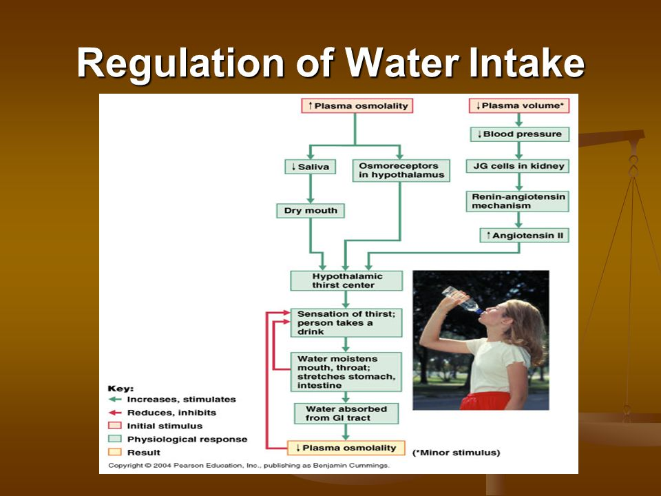 Regulation of Water Intake