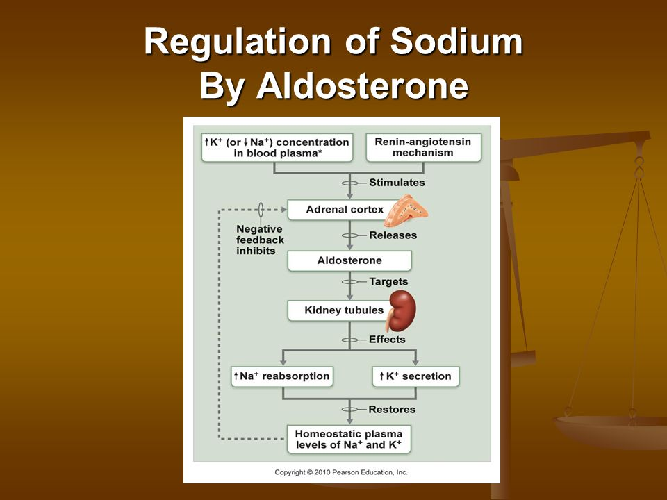 Regulation of Sodium By Aldosterone