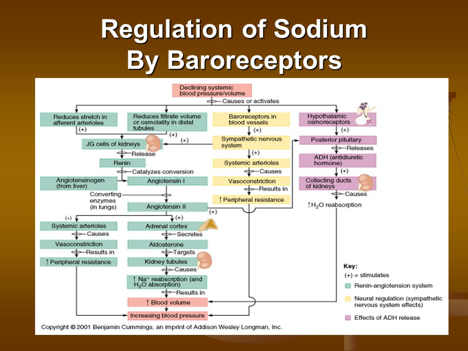 Regulation of Sodium By Baroreceptors