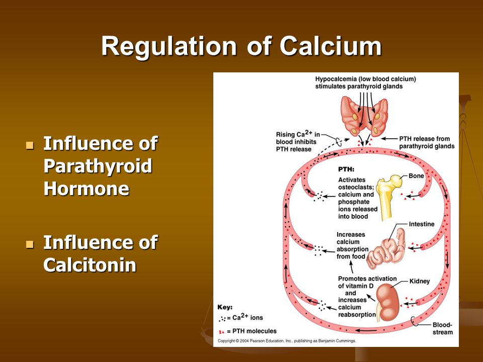 Regulation of Calcium Influence of Parathyroid Hormone