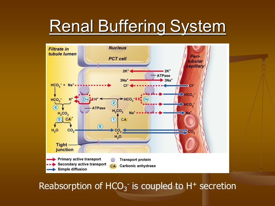 Renal Buffering System