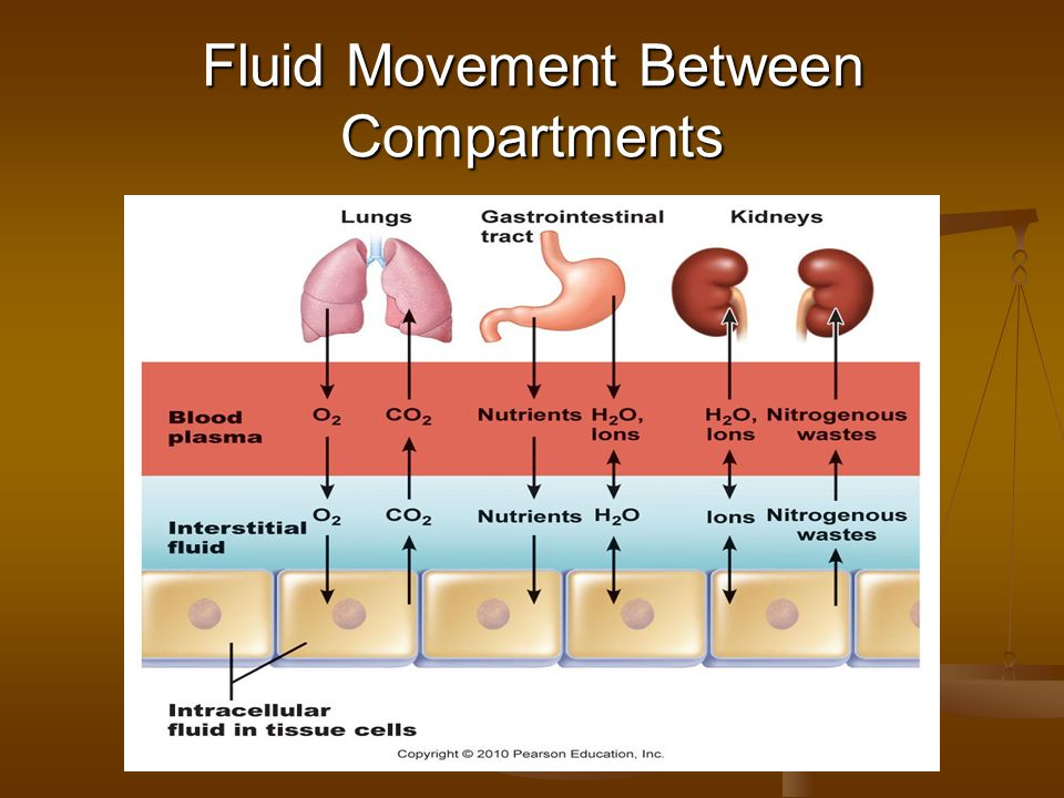 Fluid Movement Between Compartments
