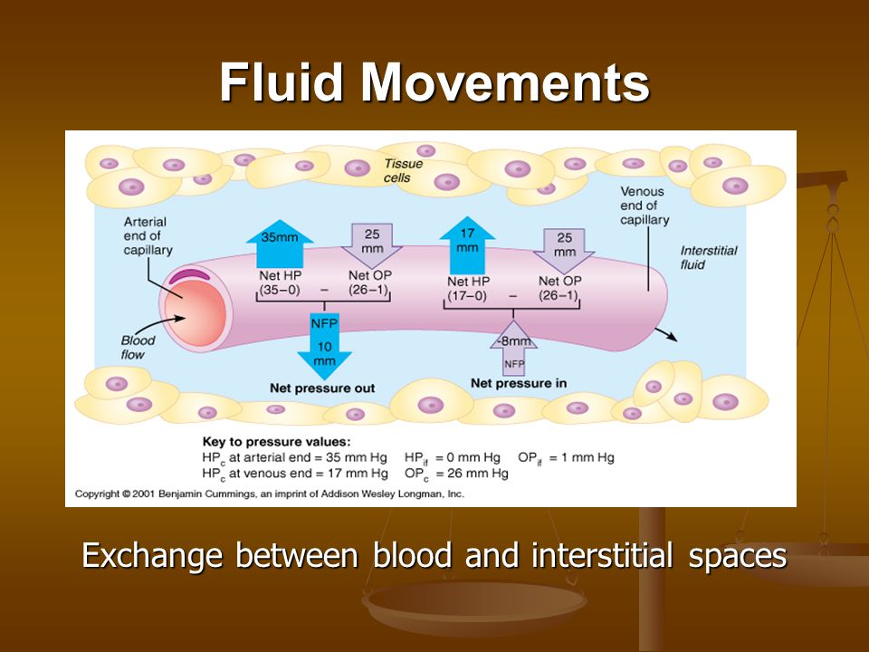 Fluid Movements Exchange between blood and interstitial spaces