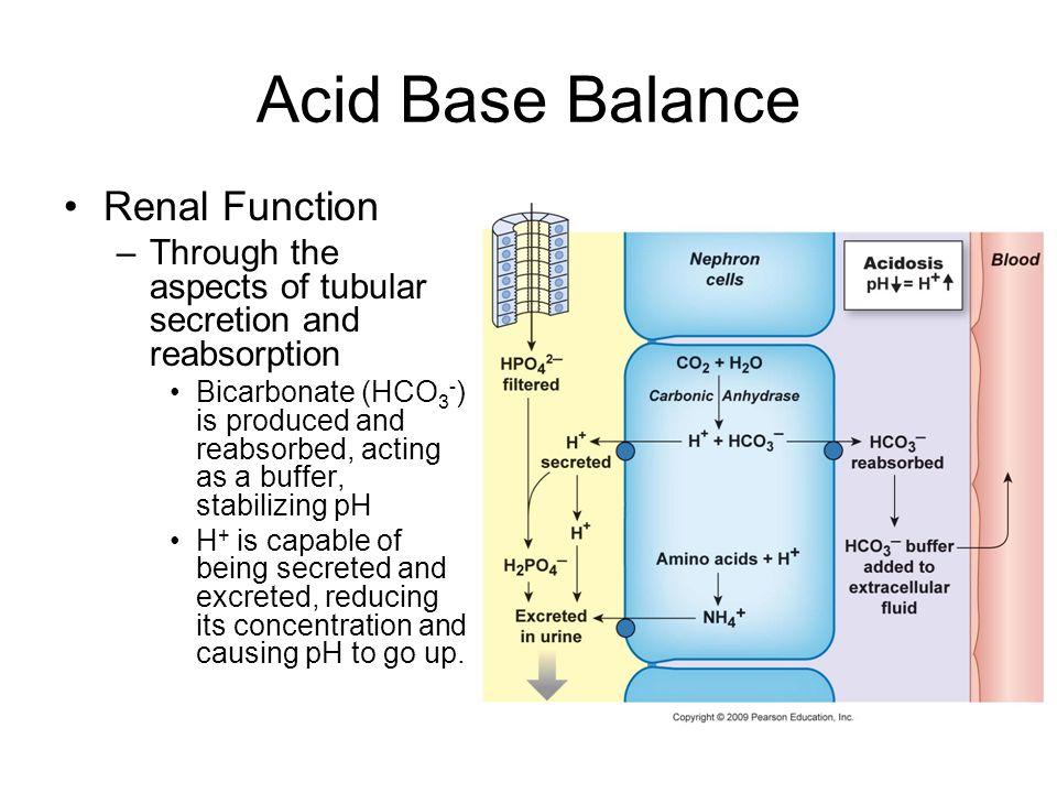 Acid Base Balance Renal Function