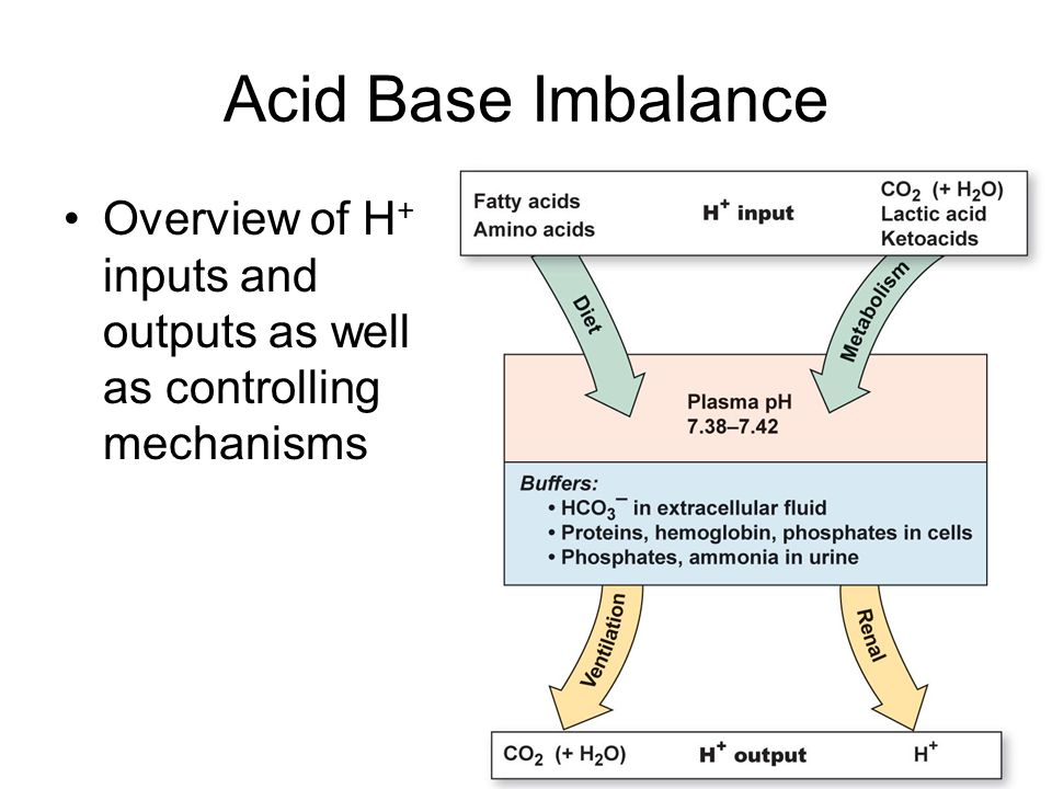 Acid Base Imbalance Overview of H+ inputs and outputs as well as controlling mechanisms