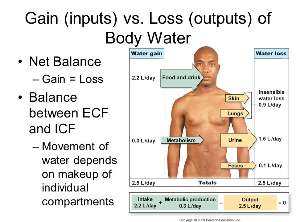 Gain (inputs) vs. Loss (outputs) of Body Water