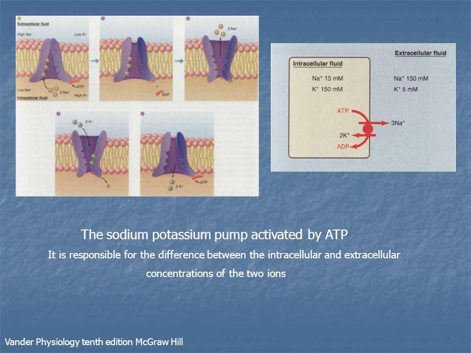 The sodium potassium pump activated by ATP