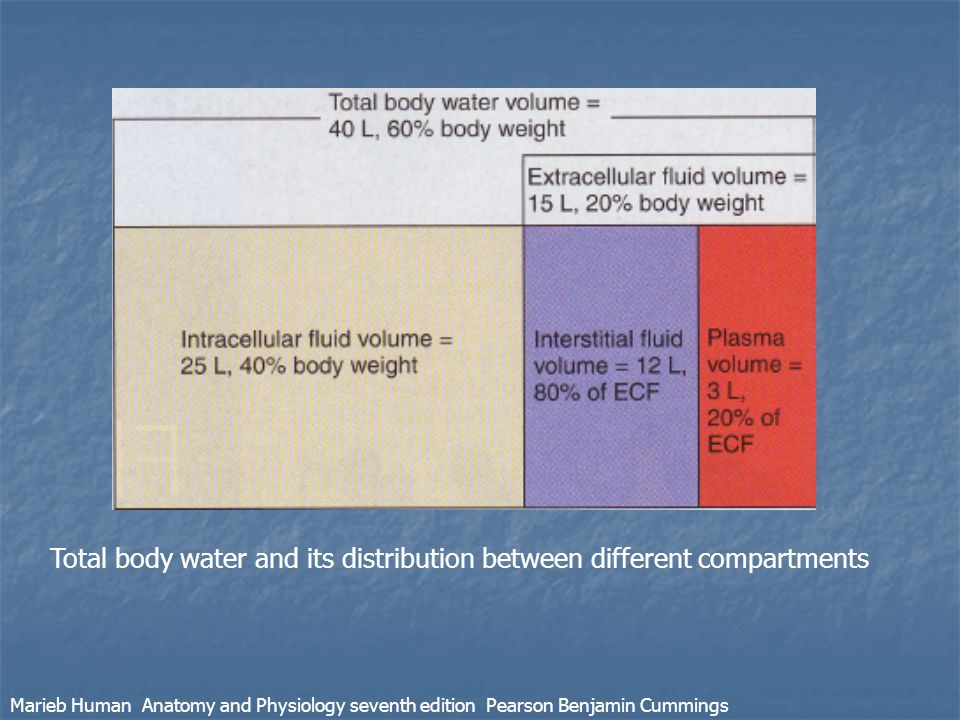 Total body water and its distribution between different compartments