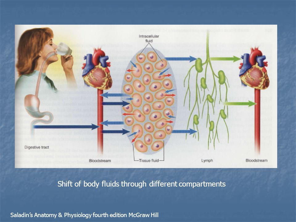 Shift of body fluids through different compartments