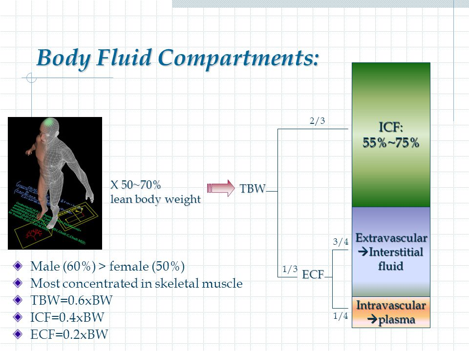 Body Fluid Compartments: