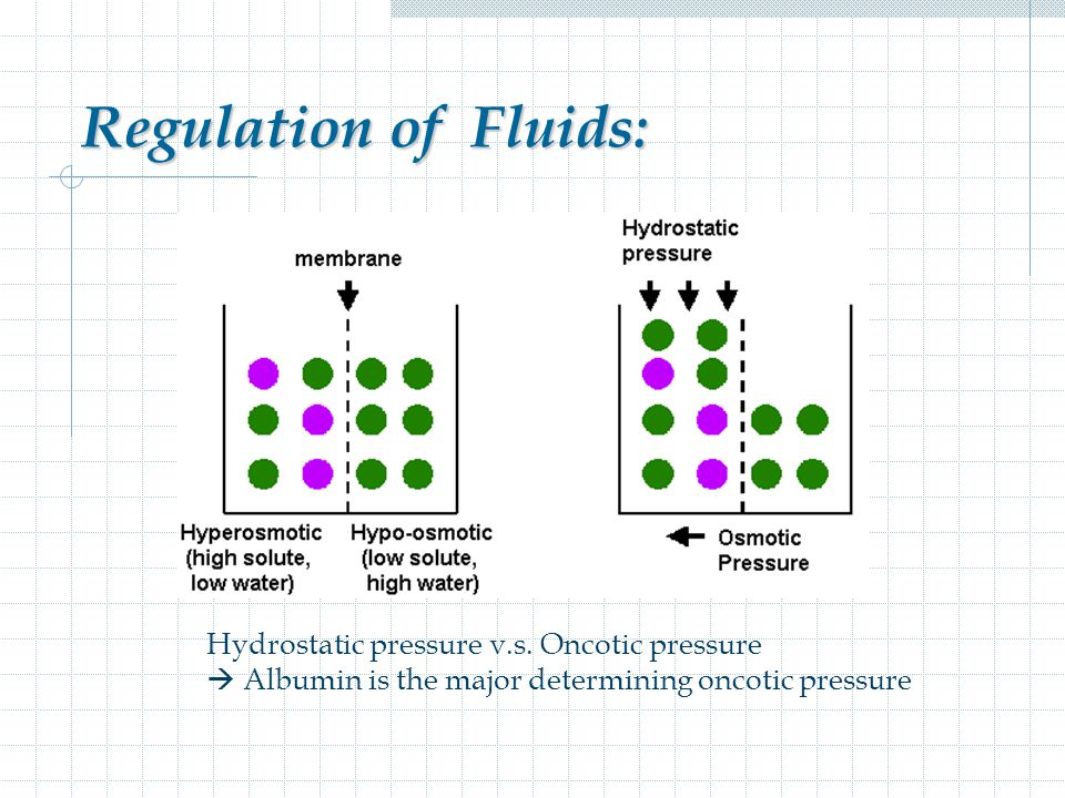 Regulation of Fluids: Hydrostatic pressure v.s. Oncotic pressure