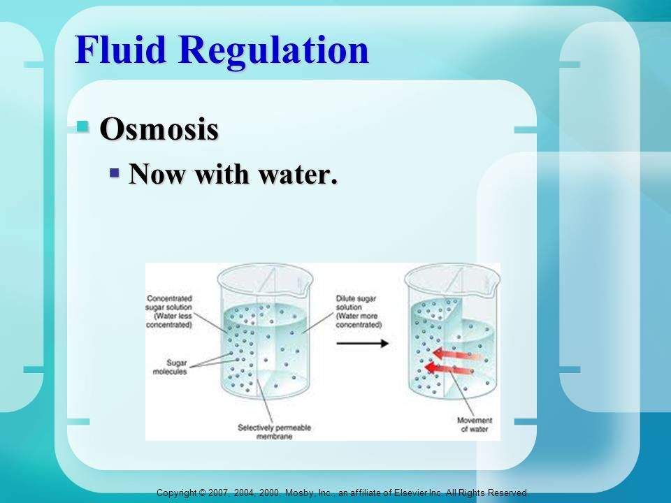 Fluid Regulation Osmosis Now with water.
