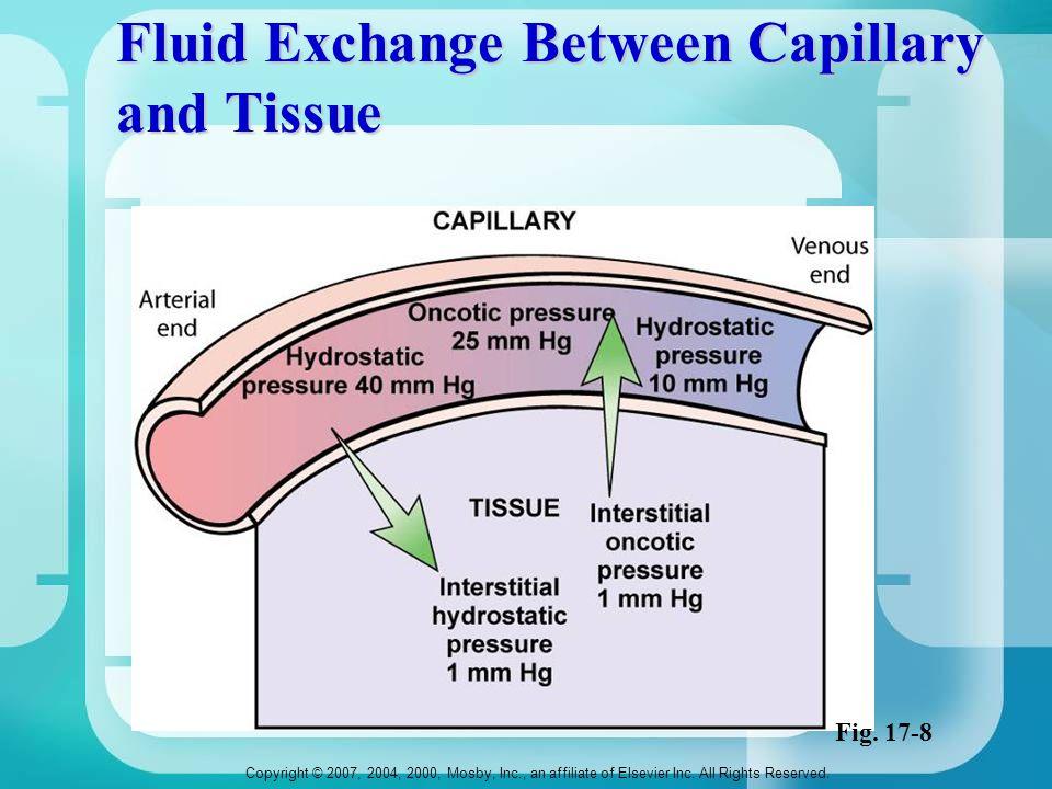 Fluid Exchange Between Capillary and Tissue